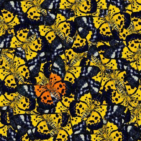 mariposas amarillas: Hermoso verde oscuro y azul Modelo hecho de la mariposa textura ala Exotic patr�n sin costuras de las mariposas azules y amarillas