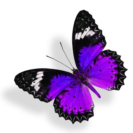 ソフト シャドウで白い背景に分離された紫色の蝶を飛んでください。