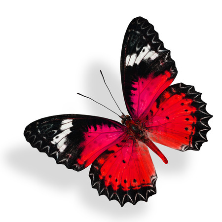 lacewing: Flying Red Butterfly isolated on white background with soft shadow Stock Photo