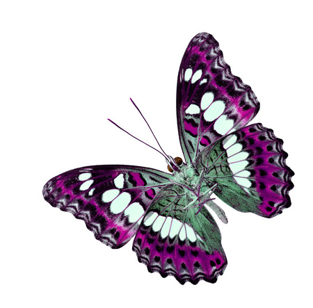 pink butterfly: Pink butterfly in fancy color isolated on white background