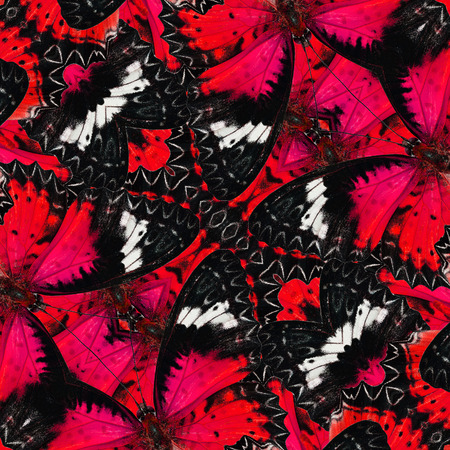 lacewing: Sweet red butterflies in full framing background with nice seamless texture