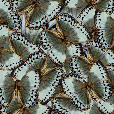 skin art: Exotic Grey and Pale Green Background made of Cambodian Junglequeen Butterflies in the greatest design and pattern Stock Photo