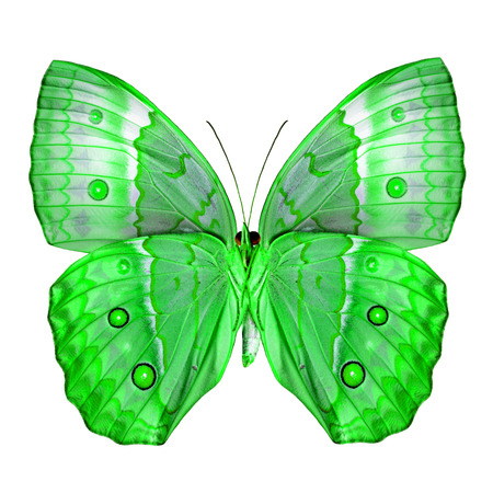 green butterfly: Exotic Green Butterfly (Cambodia Junglequeen butterfly in fancy color) isolated on white background