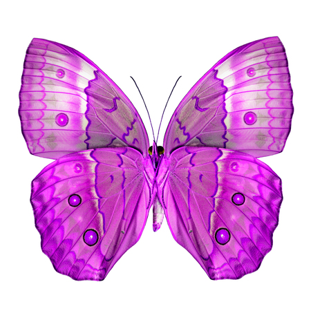 pink butterfly: Exotic Pink Butterfly (Cambodia Junglequeen butterfly in fancy color) isolated on white background