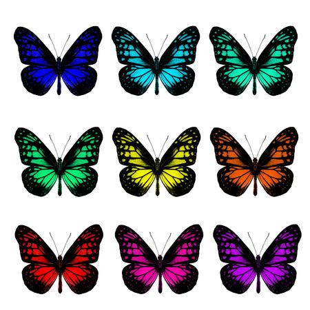 白い背景に派手な色のプロファイルに美しい黄色いガラス トラ蝶のコレクション