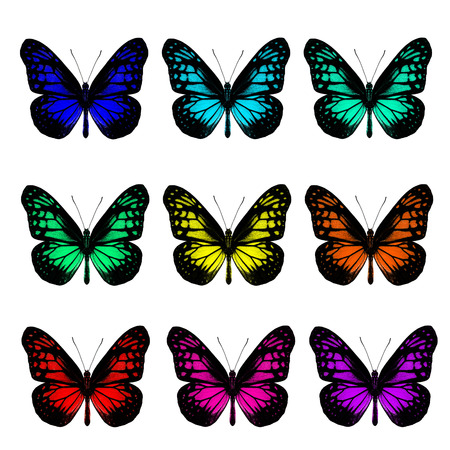 Collection of beautiful yellow glassy tiger butterfly in fancy color profile on white background