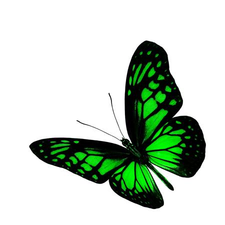 mariposa verde: La hermosa mariposa verde volar aislado en fondo blanco Foto de archivo