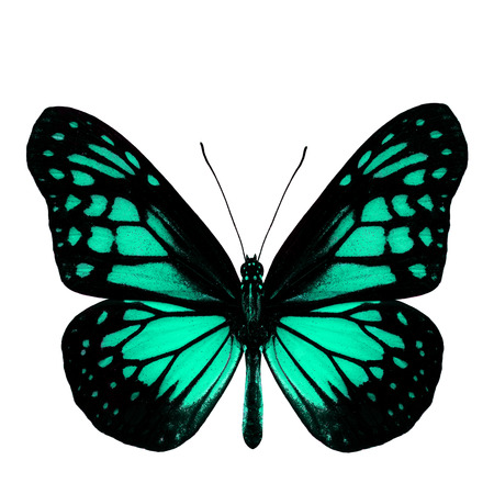 green butterfly: The most beautiful light green butterfly in fancy color profile isolated on white background Stock Photo