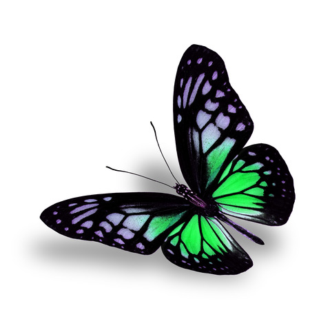 green butterfly: Beautiful Flying Green Butterfly on white background with soft shadow beneath