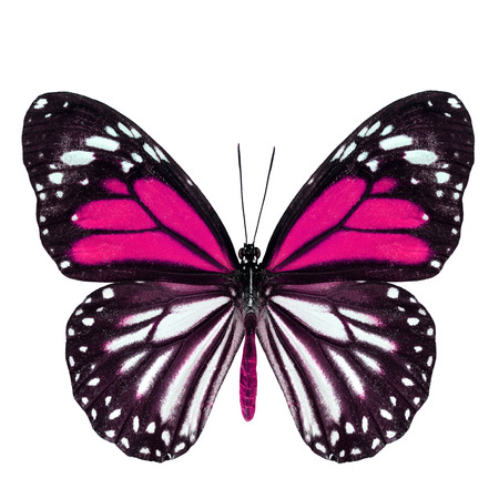 pink butterfly: Beautiful pink butterfly with stretched wings in fancy color isolated on white background Stock Photo