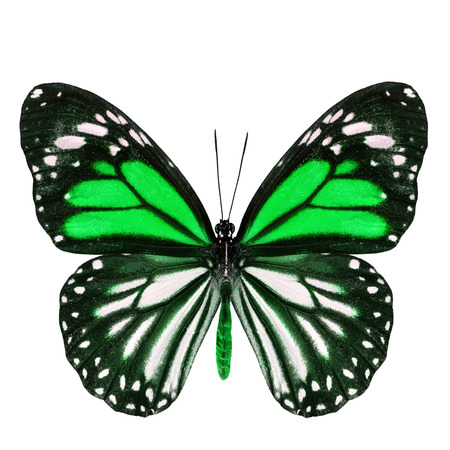 green butterfly: Beautiful green butterfly with stretched wings in fancy color isolated on white background