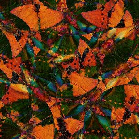 rajah: Beautiful Green and Brown Background Texture made of Tawny Rajah Butterflies Stock Photo