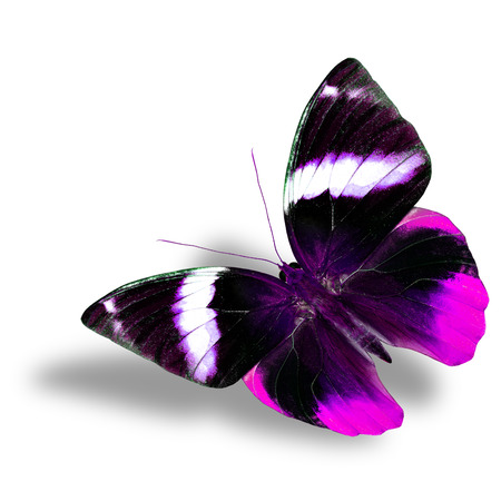 pink butterfly: The beautiful flying pink butterfly on white background with nice soft shadow Stock Photo