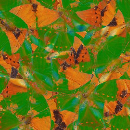 rajah: Beautiful Brown and Green Background Texture made of Tawny Rajah Butterflies