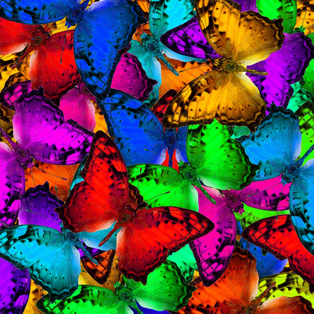 vagrant: Exotic multicolor background texture made of Vagrant butterflies in various fancy colors profile