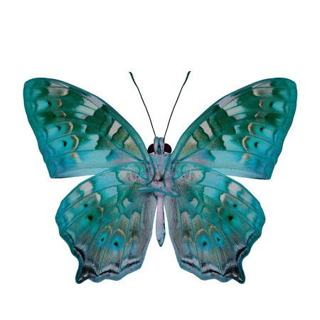 mariposa verde: La hermosa mariposa de color verde claro en el perfil de color de fantas�a aislado en fondo blanco