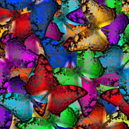 vagrant: Exotic multicolor background texture made of Vagrant butterflies in various fancy and saturation colors Stock Photo