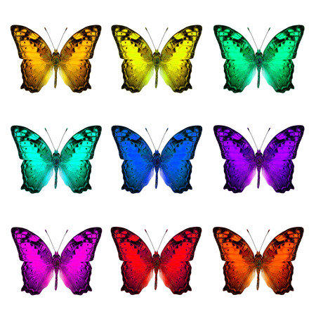 vagrant: The set of collection Vagrant Butterflies in various fancy colors on white background