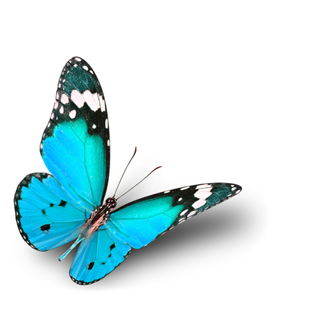 The beautiful flying pale blue butterfly on white background with soft shadow Standard-Bild