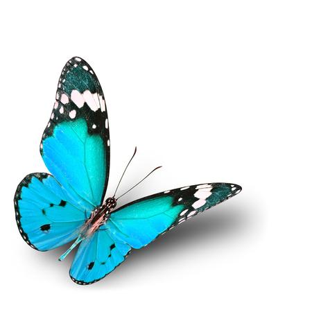 Die schöne fliegen hellblauen Schmetterling auf weißem Hintergrund mit weichen Schatten