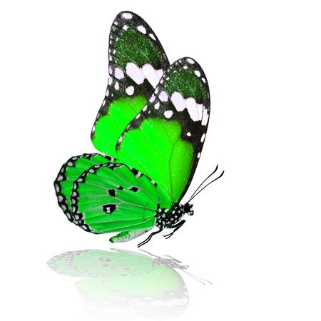 mariposa verde: Ex�tica mariposa verde volar con la sombra reflexi�n sobre fondo blanco Foto de archivo