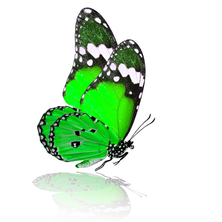 green butterfly: Exotic flying green butterfly with shadow reflection on white background Stock Photo