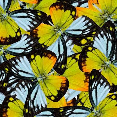 artistry: Yellow and Black background texture made of Orange Gull Butterflies in a grace artistry Stock Photo