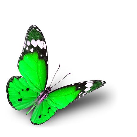 mariposa verde: La mariposa verde hermosa volando sobre fondo blanco con la sombra suave Foto de archivo