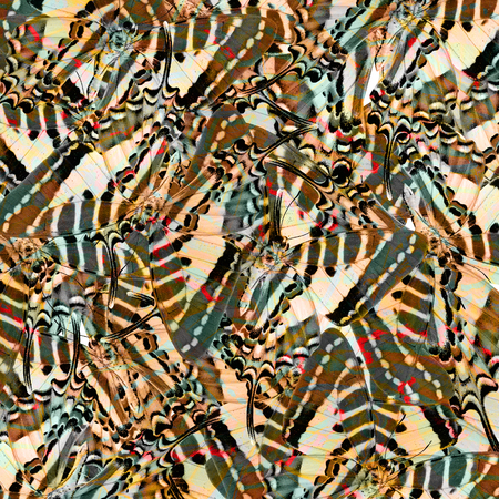 exotic butterflies: Exotic brown grey and red background texture made of Spot Swordtail butterflies wing skin