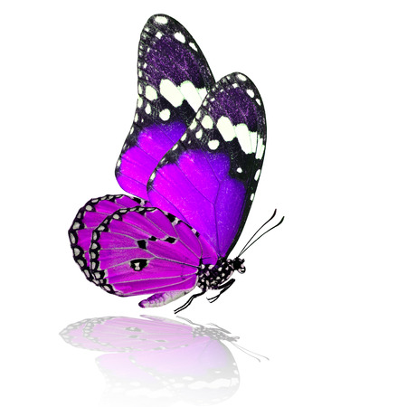 Exotic flying purple butterfly with shadow reflection on white background