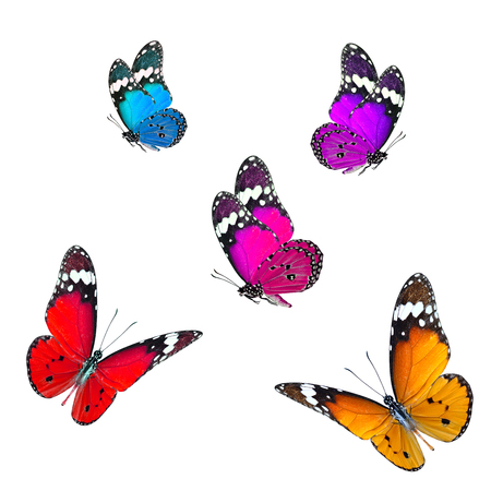 multi colors: Set of beautiful multi colors flying butterflies on white background