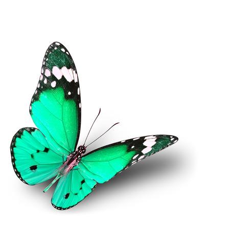 mariposa verde: La hermosa mariposa de color verde p�lido volar sobre fondo blanco con la sombra suave