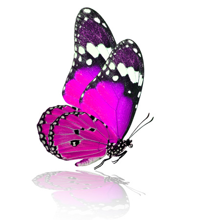 pink butterfly: Exotic flying pink butterfly with shadow reflection on white background