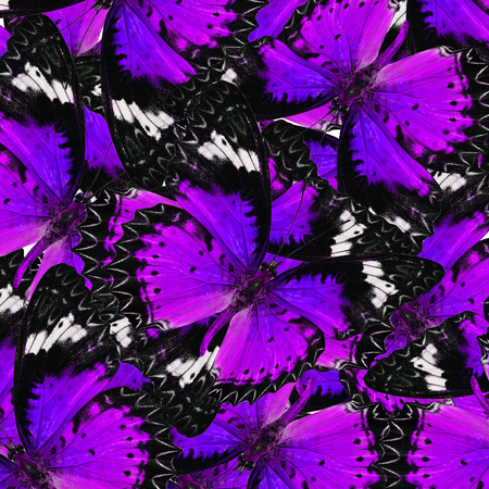 exotic butterflies: Exotic Purple Background Textured from Leopard Lacewing Butterflies in the best design
