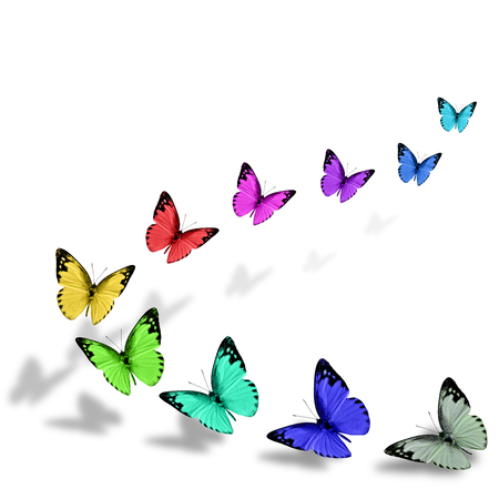 flocking: Series of beautiful flying various fancy color of Lesser Albatross butterflies in a great up ward flocking