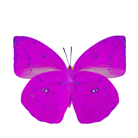 pink butterfly: The beautiful pink butterfly lower wing part in fancy color profile isolated on white background Stock Photo