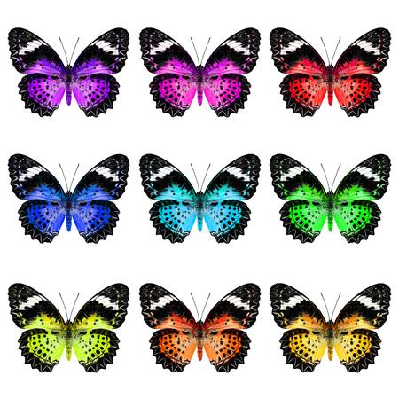 mariposas amarillas: Conjunto de Leopard Lacewing Mariposa en colorido y elegante perfil de color