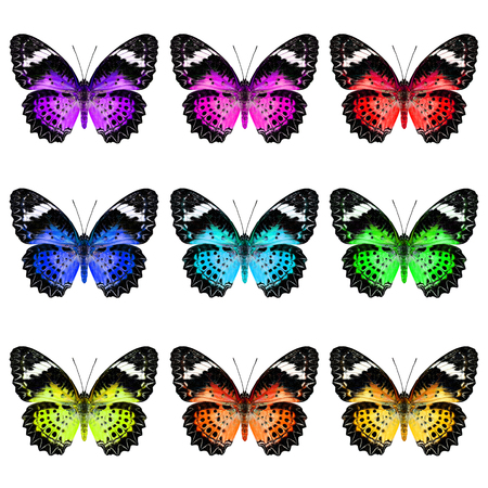 purple butterfly: Set of Leopard Lacewing Butterfly in colorful and fancy color profile
