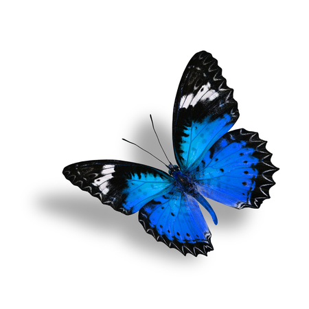 lacewing: Beautiful Flying  Blue Butterfly (Leopard Lacewing) with soft shadow beneath on white background Stock Photo
