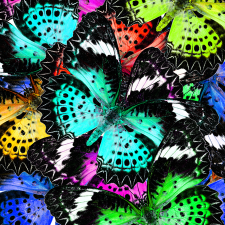 lacewing: Exotic Colorful Background Pattern made of Leopard Lacewing butterflies in fresh colors