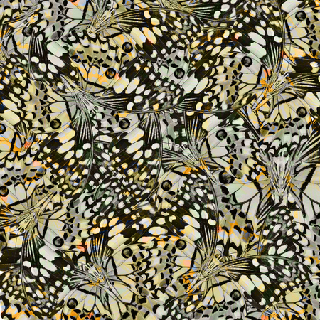 grey background texture: Exotic yellow and grey background texture made from Lime Butterflies