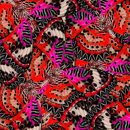 lacewing: Beautiful Red and Pink Background Texture made of Leopard Lacewing Butterflies Stock Photo