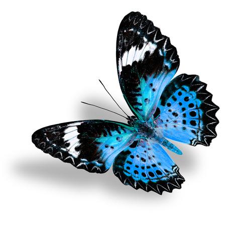 ソフト シャドウと白い背景の青い蝶 (ヒョウ クサカゲロウ) を飛行