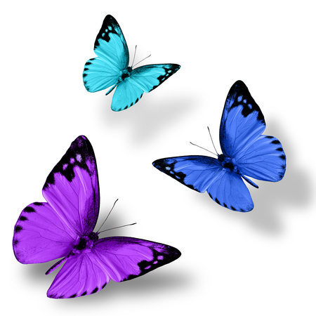 green butterfly: Beautiful flying purple blue and green butterfly on white background with nice shadow