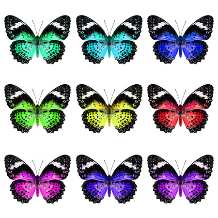 lacewing: Beautiful set of Leopard Lacewing Butterfly in colorful and fancy color profile