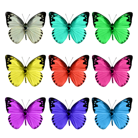 wing span: Set of Lesser Albatross butterflies in various fancy colors on white flame