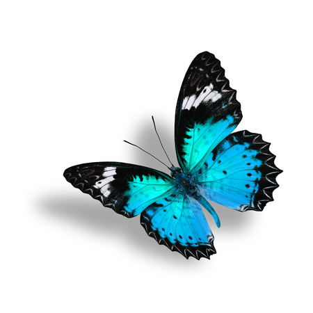 chrysope: Beautiful Flying Light Blue Butterfly (Leopard Lacewing) with soft shadow beneath on white background