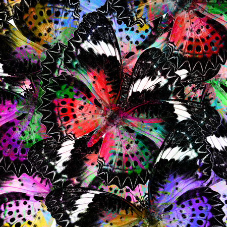 lacewing: The Exotic Colorful Background Pattern made of Leopard Lacewing butterflies in fresh colors