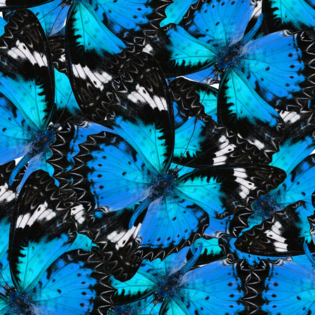 lacewing: Exotic Blue Background Textured from Leopard Lacewing Butterflies in the best design Stock Photo