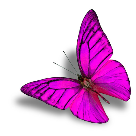 pink butterfly: Exotic flying pink butterfly with soft shadow beneath on white background Stock Photo